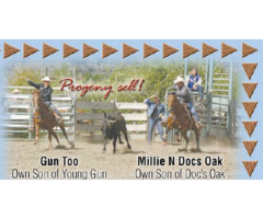 Sperry Quarter Horses Production Sale Sunday, August 12, 2018