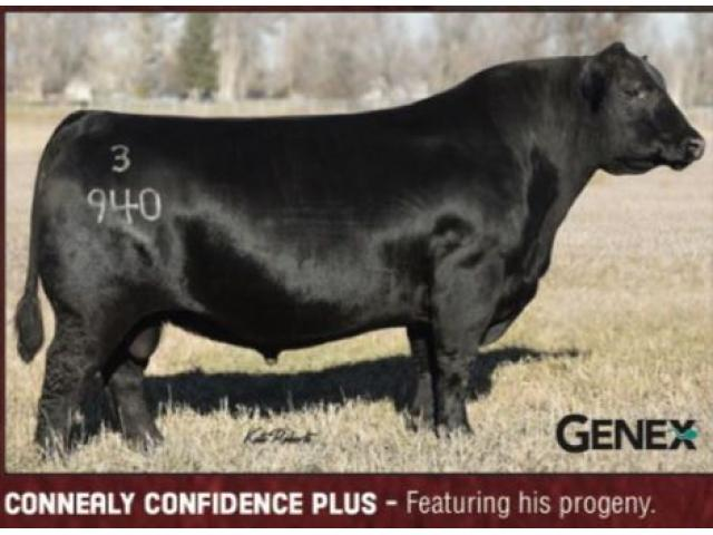 Ogden Angus Ranch Second Semi-Annual Production Sale November 4, 2018