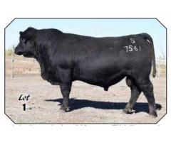 Spickler Ranch North December 8th, 2018 Angus Bull & Female Production Sale